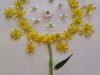 fleur-1-e1585749145208
